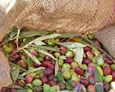 burlap-bag-olives.jpg